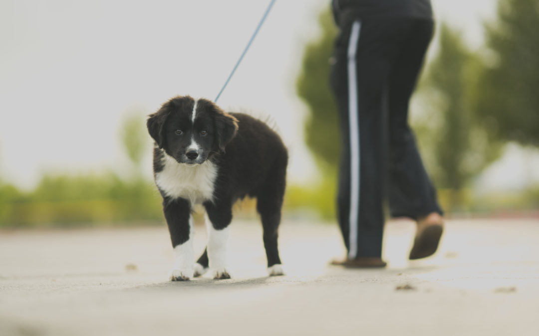 Pet Care Providers – How to Choose One?
